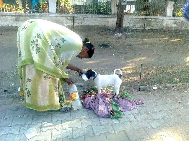 Photo Animal Helplines In Delhi And Ncr Jaagruti Images