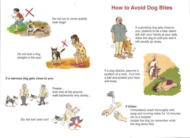 How to behave with a street dog_courtesy WSPA India (1)