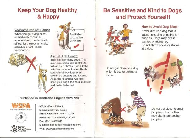 How to behave with a street dog_courtesy WSPA India (2)