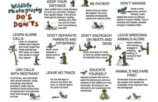 Do's and Dont's while doing Wildlife Photography (courtesy: http://www.birdwatch.ph, Wild Bird Club of the Philippines)