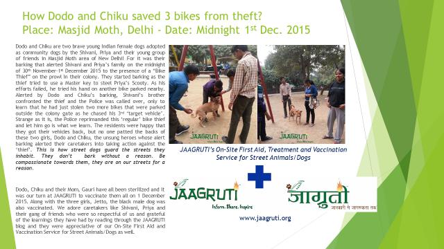 Dodo and Chiku_Brave Indian Street Dogs story 01122015